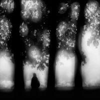 Trees_mic